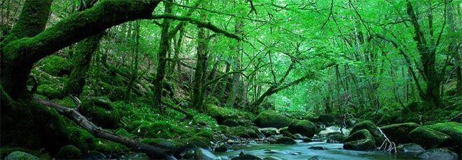 Observar la naturaleza para un cambio de vida